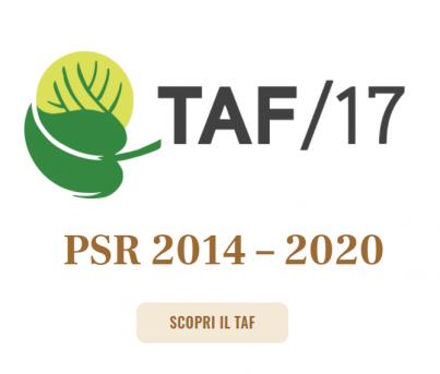 TAF 17